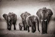 elephant herd rock texture