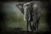 elephant on the rocks