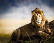 majestic male on mound