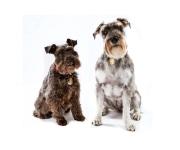 2015-04-19_Jim_White_dogs__MG_9002-Edit_by_Quinte_Studios_web